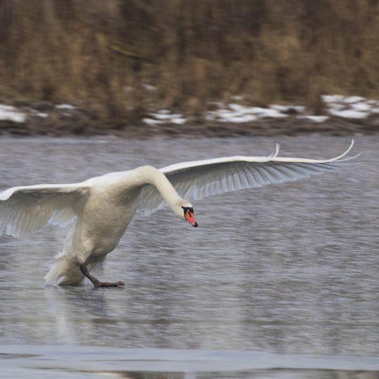 Landing op het ijs