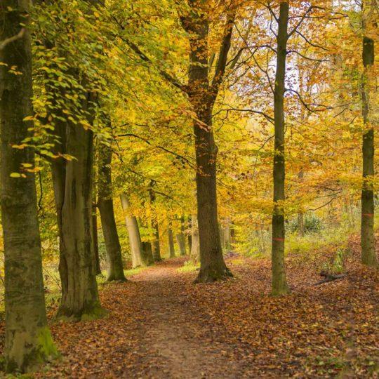 Herfst in het Kruisbergse Bos