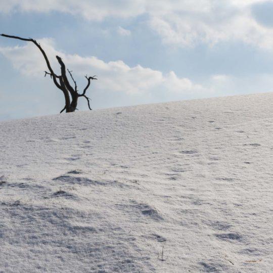 Wekeromse zand Noordpool in maart 2018