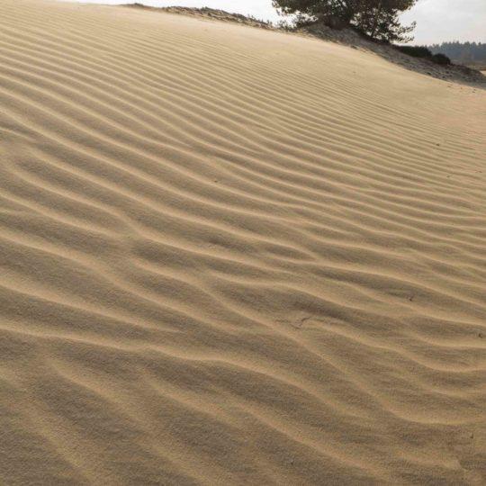 Wekeromse zand nog zonder voetstappen