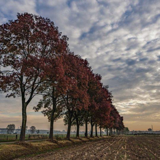 Binnenveld bij Wageningen richting herfst