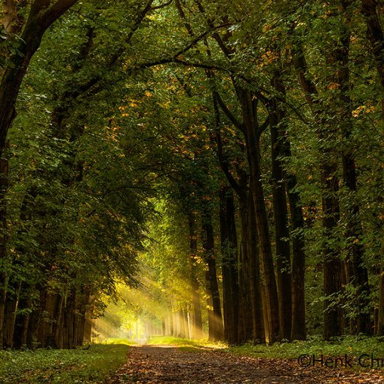Bos bij Lochem